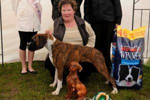 All Ireland Dog Show