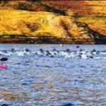 The Great Fjord Swim