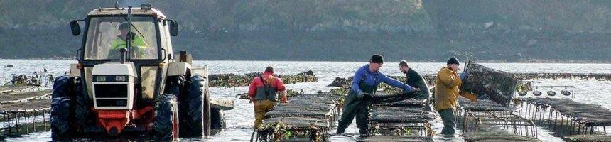 DK Connemara Oysters Farm