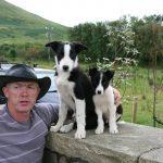 Joyce Country Sheepdogs