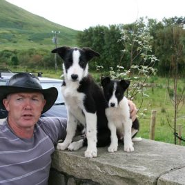 Joyce Country Sheepdogs